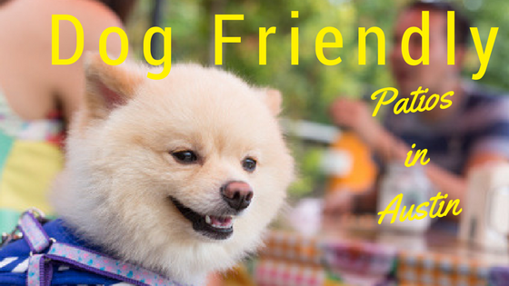 Dog Friendly Patios in Austin