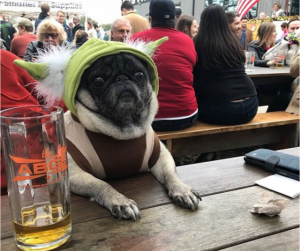 dog friendly restaurants in austin
